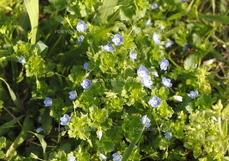 小さな草花の素材 [FYI00304545]