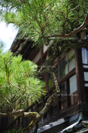 松と日本家屋の素材 [FYI00304778]