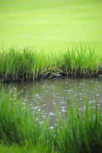 雨の落ちる池の写真素材 [FYI00304783]