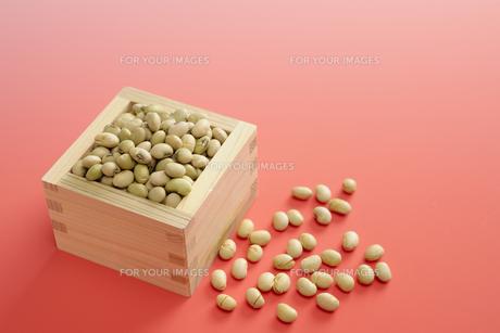 福豆の写真素材 [FYI00304962]