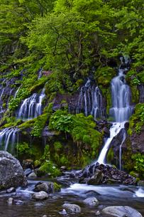 新緑の吐竜の滝の写真素材 [FYI00306907]