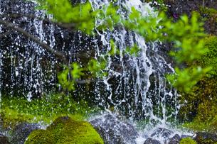 水しぶきと新緑の枝の写真素材 [FYI00306908]