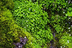 水滴と草の写真素材 [FYI00306920]