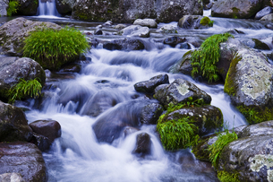 清流と草の生えた石の写真素材 [FYI00306930]