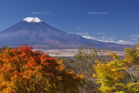 紅葉の木々と富士山の写真素材 [FYI00307119]