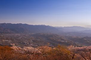 桜並木と秩父市街と山並みの写真素材 [FYI00307184]
