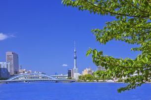 新緑の隅田川とスカイツリーの写真素材 [FYI00307307]