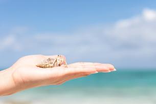 ヤドカリを持つ女性の手と海の写真素材 [FYI00307643]