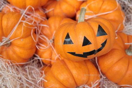 ハロウィンのかぼちゃの写真素材 [FYI00307672]