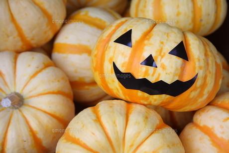 ハロウィンのかぼちゃの写真素材 [FYI00307681]