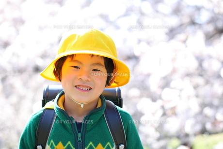 桜と笑顏の小学1年生の写真素材 [FYI00307724]