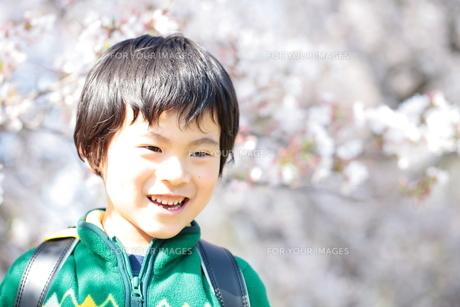 桜と笑顔の男の子の写真素材 [FYI00307729]