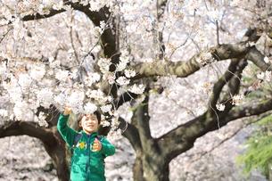 桜の木と笑顔の男の子の写真素材 [FYI00307745]