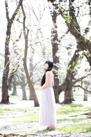 桜とロングドレスを着た若い女性の写真素材 [FYI00307748]