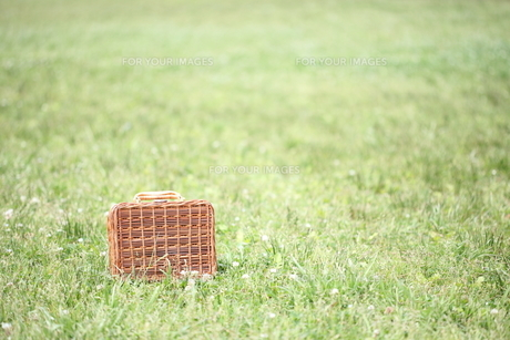 芝生とピクニックバックの写真素材 [FYI00307782]