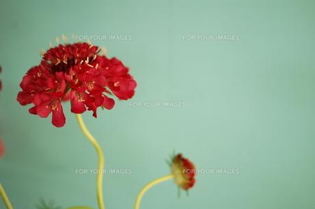 Flowerの写真素材 [FYI00307950]
