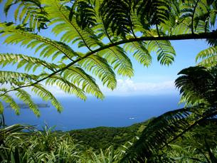 小笠原諸島母島の乳房山からの眺めの写真素材 [FYI00307993]
