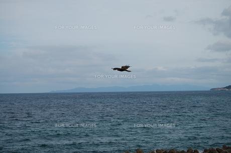鷹と海の写真素材 [FYI00308107]