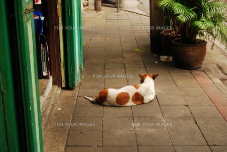 番犬の写真素材 [FYI00308194]