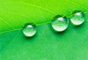 葉と水滴の写真素材 [FYI00308599]