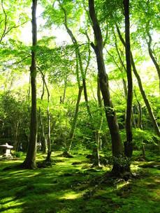初夏の京都の写真素材 [FYI00308613]