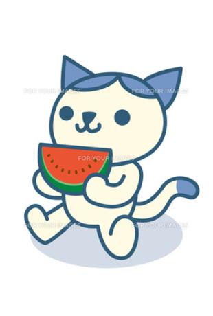 スイカを食べる猫の素材 [FYI00308706]