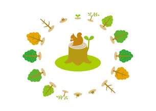 樹木の成長サイクルの素材 [FYI00308760]