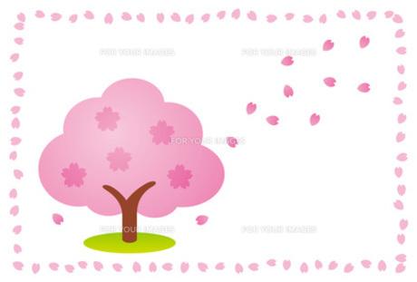 桜の木と舞い散る花びらの素材 [FYI00308765]