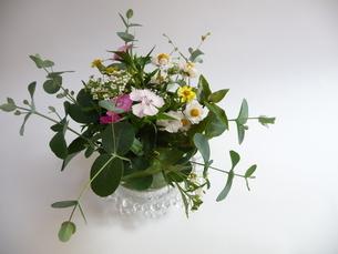 小さな花の写真素材 [FYI00308857]