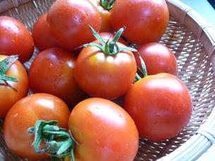 フルーツトマトの写真素材 [FYI00308869]