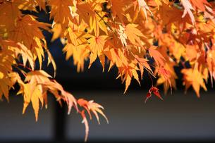 秋の月島の写真素材 [FYI00309759]