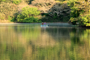 緑の池の写真素材 [FYI00309783]