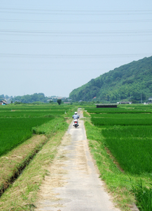 田舎道の写真素材 [FYI00310974]