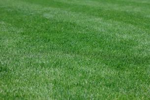 芝生の素材 [FYI00311102]