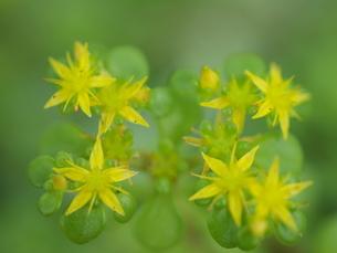 黄色い花の写真素材 [FYI00311154]
