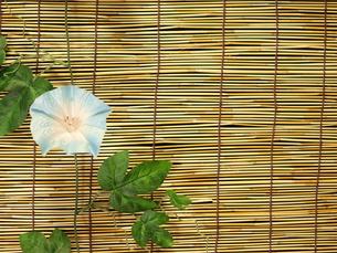 すだれと朝顔(横)の写真素材 [FYI00311174]