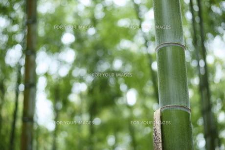 竹林の素材 [FYI00311278]