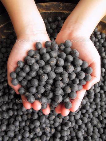 丹波の黒豆の素材 [FYI00311566]