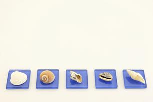 地元の海で拾った貝で置物を作ってみましたの写真素材 [FYI00311592]