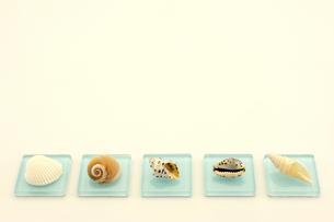 地元の海で拾った貝で置物を作ってみましたの写真素材 [FYI00311598]