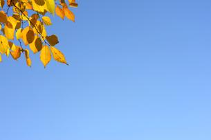 晩秋の青空の素材 [FYI00311737]