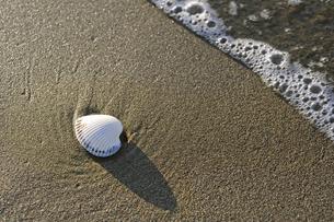 波打ち際の白い貝殻の素材 [FYI00311833]