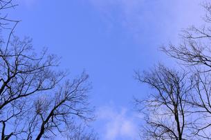 冬 晴れ間の青空の写真素材 [FYI00311902]