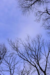 冬 晴れ間の青空の素材 [FYI00311903]