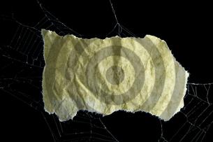 蜘蛛の糸と破いた紙の写真素材 [FYI00311919]