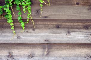 木壁と蔦の写真素材 [FYI00312047]