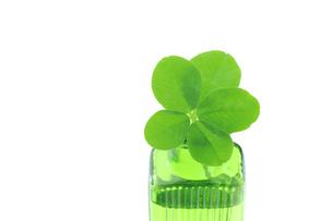 五つ葉のクローバーと小さなボトルの写真素材 [FYI00312068]