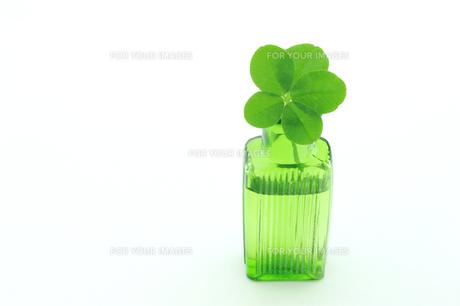 五つ葉のクローバーと小さなボトルの素材 [FYI00312083]