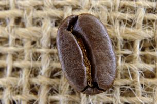 1粒のコーヒー豆 の写真素材 [FYI00312094]