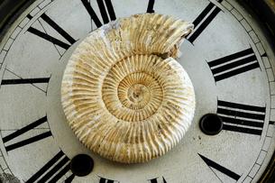 アンモナイト 時計文字盤の写真素材 [FYI00312099]